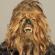 Intervention – Chewbacca